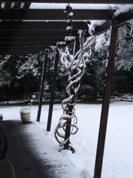 The Winter 2011